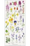 Produktbilde av Spiselige blomster A4